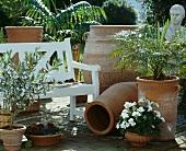 Terrakottavasen mit Olivenbäumchen, Pelargonium und Dattelpalme auf sonniger Gartenterrasse