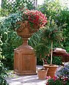 Dekorative Terrakottavase auf einem Terrakottasockel mit Mini-Hängepetunien und Salbei; daneben ein Zwerggranatapfelbäumchen