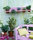 Pflanzen in Terrakottatöpfen (Feigenkaktus, Geldbaum, Fettblatt) auf einer Terrasse mit Wandbord und rosa Sitzbank