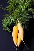 Three carrots with leaves