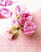 Wild rose petals