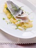Pochiertes Forellenfilet auf Kartoffelsalat mit Ingwer