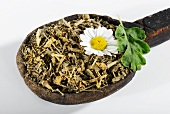 Dried feverfew on a wooden spoon