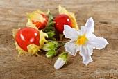 Lychee tomatoes with flowers (Solanum sisymbrifolium)