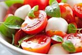 Tomato and mozzarella salad with basil