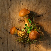 Larch bolete mushrooms on a wooden surface