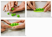 Split-open pods of peas being crafted out of modelling clay