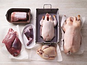 Various types of poultry and game