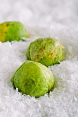 Brussels sprouts in artificial snow