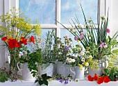 Various herbs in pots on a windowsill