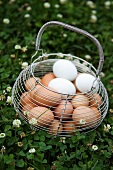 Brown and White Eggs in a Wire Basket; Outdoors