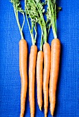 Five Whole Carrots with Stems on a Blue Background