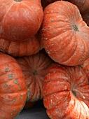 Ornamental Gourds at a Farmer's Market