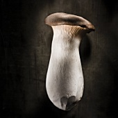 King trumpet mushroom against a black background