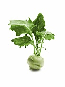Kohlrabi with leaves
