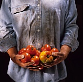 Man with Dirty Hands Holding Fresh Tomatoes
