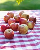 Bio Fuji Äpfel auf Gartentisch mit rot-weiss kariertem Tischtuch