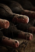 Antique, dusty wine bottles laid down in a cellar