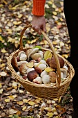 A woman carrying a basket of porcini mushrooms through the autumnal forest