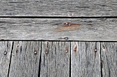 Weathered wooden boards (close-up)