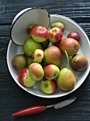 A Bowl of Assorted Apples and Pears; Forelle Pears, Seckel Pears and Lady Apples