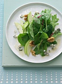 Mixed Green Salad with Apple, Walnuts and Blue Cheese; On a White Plate