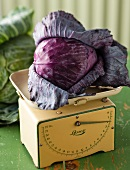 A red cabbage on a set of kitchen scales