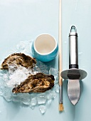 Oysters on ice with a knife, paintbrush and small dish