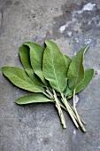 Fresh sage leaves