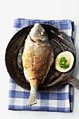 Gilt-head bream in a frying pan on a checked cloth
