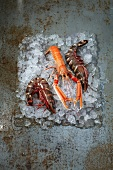King prawns and a langoustine on ice