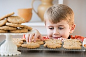 Boy taking fresh cookie from rack