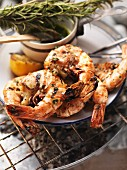 Barbecued king prawns with herb-infused oil and rosemary