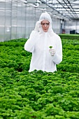 Germany, Bavaria, Munich, Scientist examining parsley plants in greenhouse