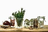 Verschiedene Kräuter und Gewürze zum Einlegen