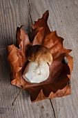 Fresh porcini mushroom on a dried autumn leaf