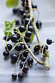 Branch with black currants