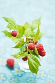 Raspberries with leaves in a glass