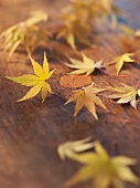Yellow Autumn Japanese Maple Leaves on a Wooden Table