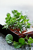 Rosemary and marjoram on a wooden board