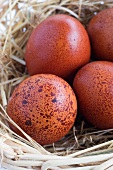 Brown speckled eggs in a nest