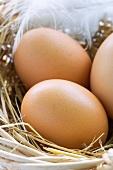 Braune Eier im Nest mit Feder