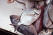 Fresh Caught Butter Fish at Ortigia Market in Siracusa, Sicily