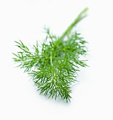 A sprig of dill