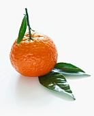 Mandarine mit Blättern als Freisteller