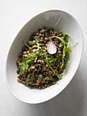 Lentil salad with rocket