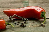 A red chilli pepper on a rustic wooden table