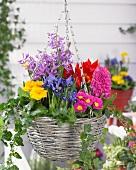 Blumenampel mit verschiedenen Frühlingsblumen auf der Terrasse