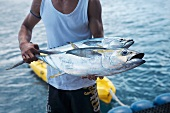 A man holding two freshly caught bigeye tuna