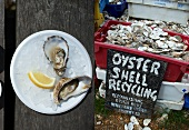 Dual image: fresh oysters on a plate; oyster shells for recycling in a crate